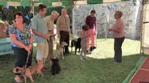 Pets Service